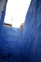 A Day in the Life of a Chefchaouen Cat VII