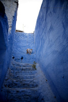 A Day in the Life of a Chefchaouen Cat V