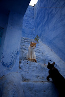 A Day in the Life of a Chefchaouen Cat II