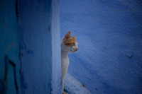 A Day in the Life of a Chefchaouen Cat I