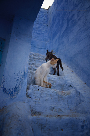 A Day in the Life of a Chefchaouen Cat III