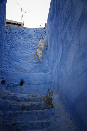 A Day in the Life of a Chefchaouen Cat VI